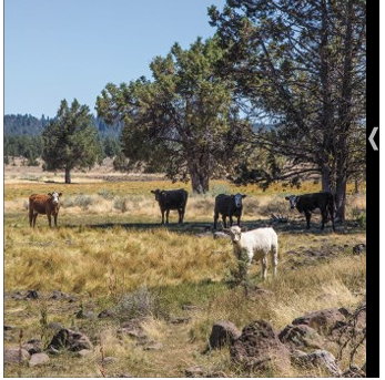 Managed grazing helps forests, experts say