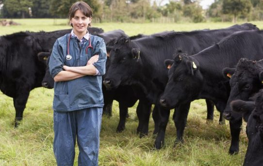 Farm Babe: Antibiotic resistance from livestock to humans, easily explained – AGDAILY.COM