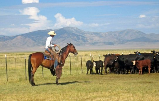 Scientists Rebuke Livestock Grazing Critics – This is Reno