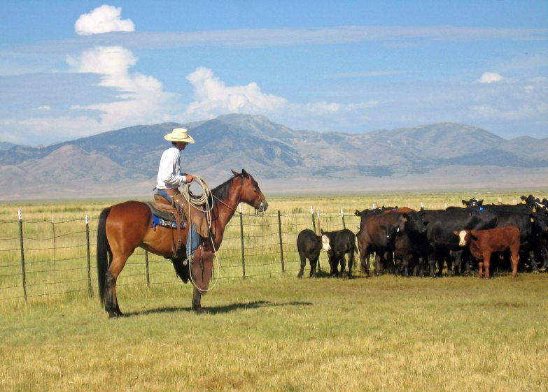 Scientists Rebuke Livestock Grazing Critics - This is Reno