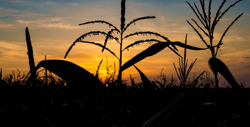 This much is certain: For farmers, crop insurance is essential