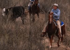 A Coalition of Ranchers Protects Habitat, At-Risk Species, and a Way of Life