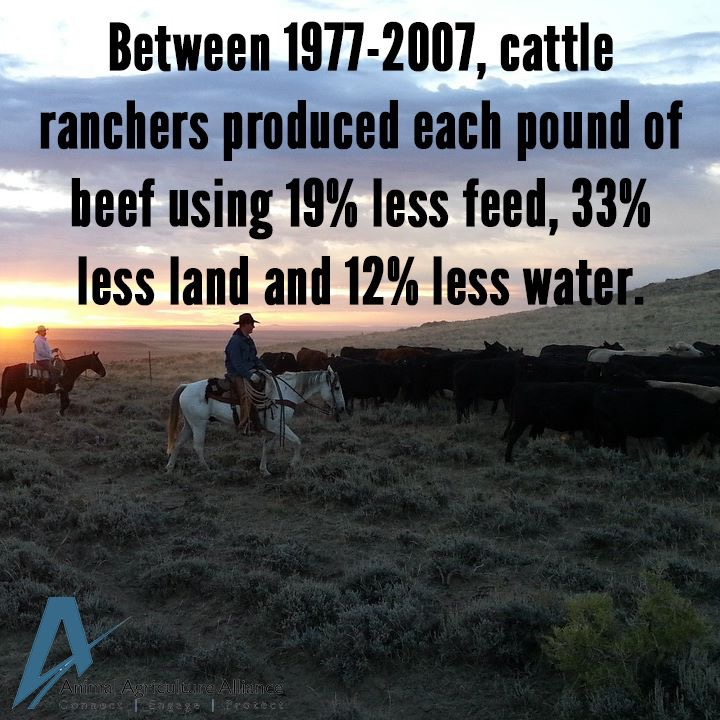 Ranchers, the true conservationists - Animal Agriculture Alliance
